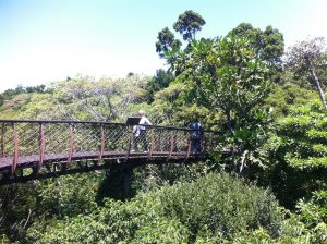 Bridge Kirstenbosch Botanical Gardens